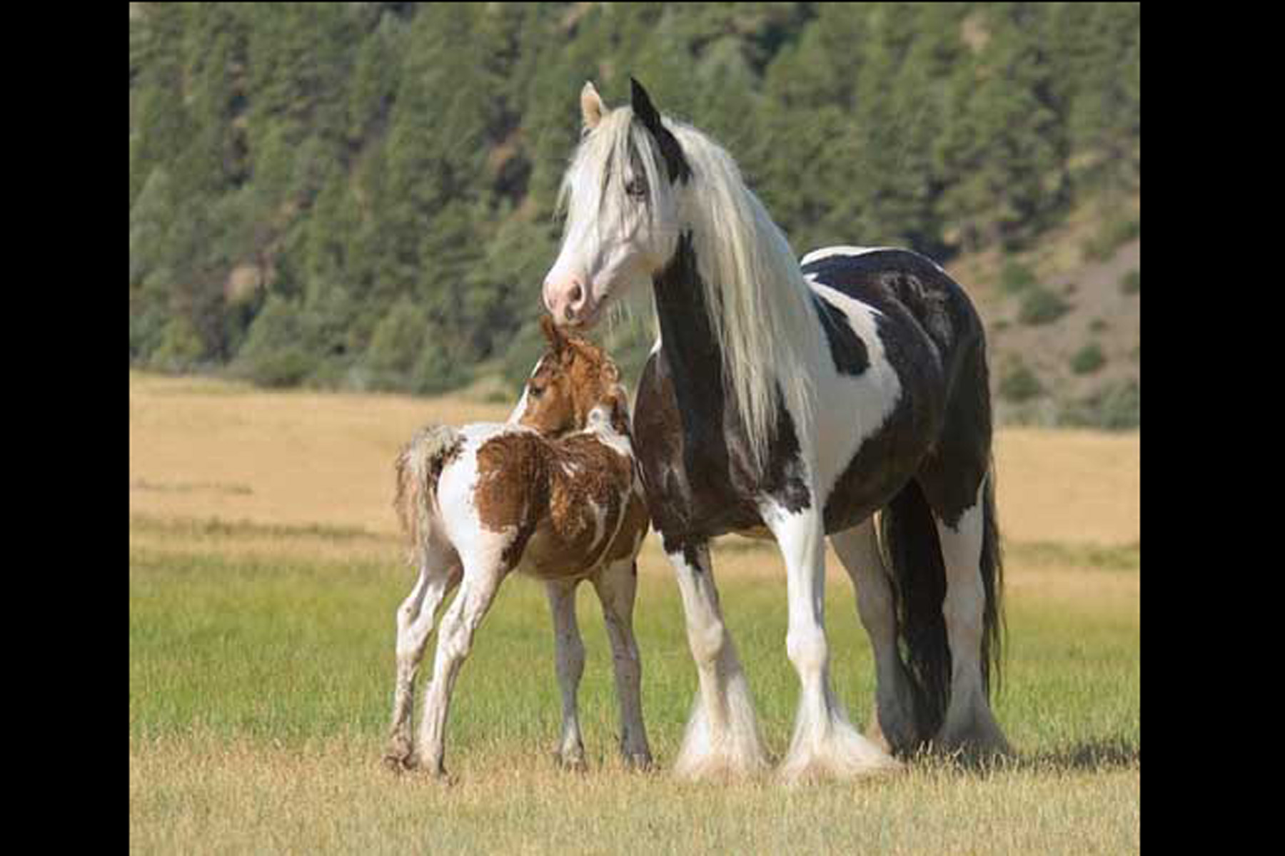 """SHANNON & TRAVELER""  Jamie Sharp, Firefly Ranch"